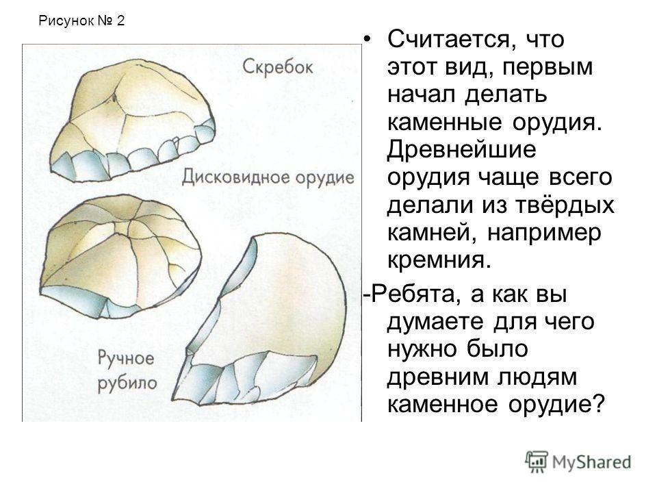 Считается, что этот вид, первым начал делать каменные орудия. Древнейшие орудия чаще всего делали из твёрдых камней, например кремния. -Ребята, а как вы думаете для чего нужно было древним людям каменное орудие? Рисунок 2