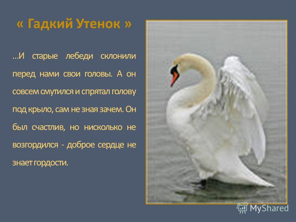 « Гадкий Утенок » …И старые лебеди склонили перед нами свои головы. А он совсем смутился и спрятал голову под крыло, сам не зная зачем. Он был счастлив, но нисколько не возгордился - доброе сердце не знает гордости.