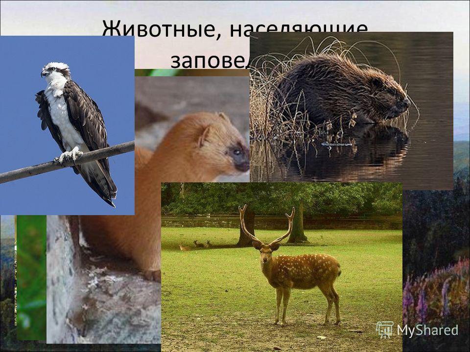 Животные, населяющие заповедник