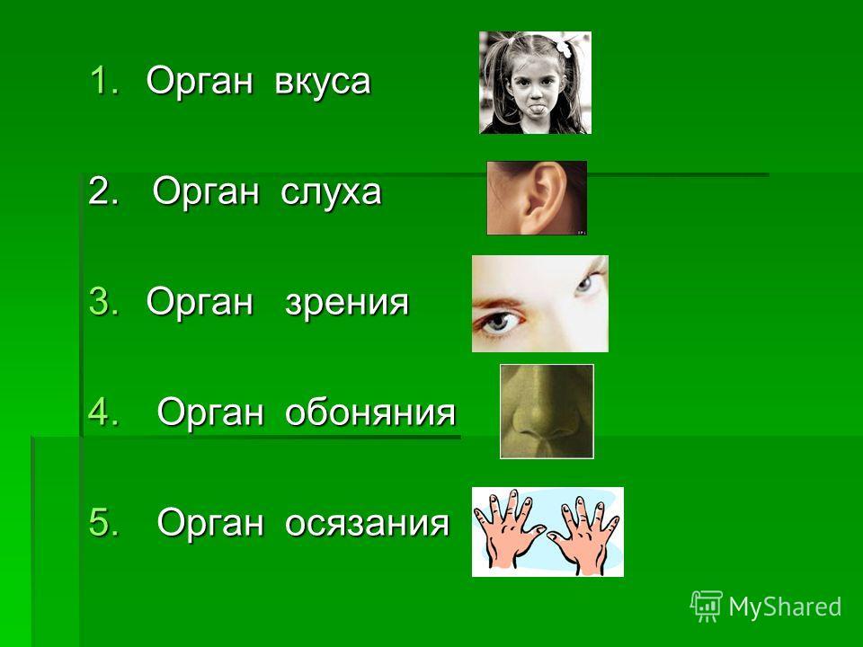 1.Орган вкуса 2. Орган слуха 3.Орган зрения 4. Орган обоняния 5. Орган осязания