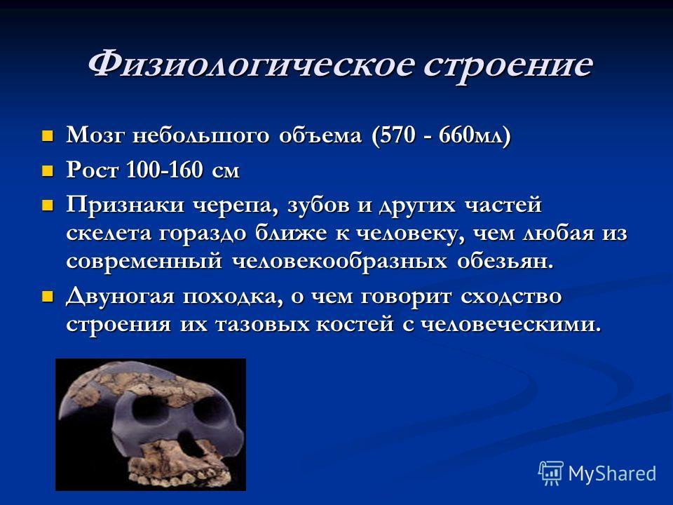 Физиологическое строение Мозг небольшого объема (570 - 660мл) Рост 100-160 см Признаки черепа, зубов и других частей скелета гораздо ближе к человеку, чем любая из современный человекообразных обезьян. Двуногая походка, о чем говорит сходство строени