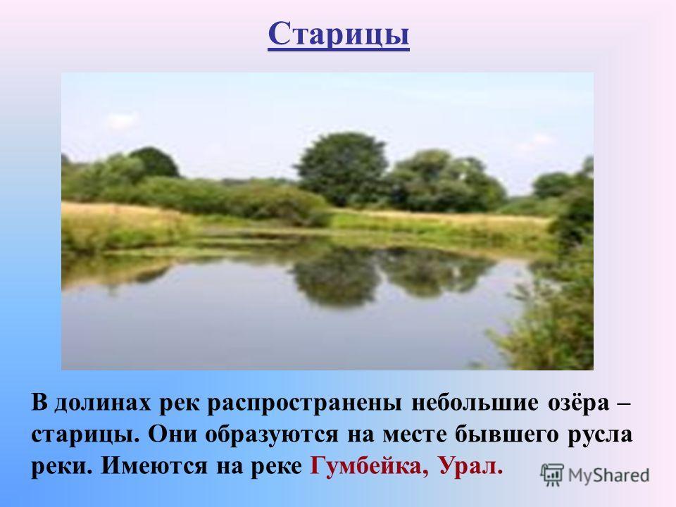 Старицы В долинах рек распространены небольшие озёра – старицы. Они образуются на месте бывшего русла реки. Имеются на реке Гумбейка, Урал.