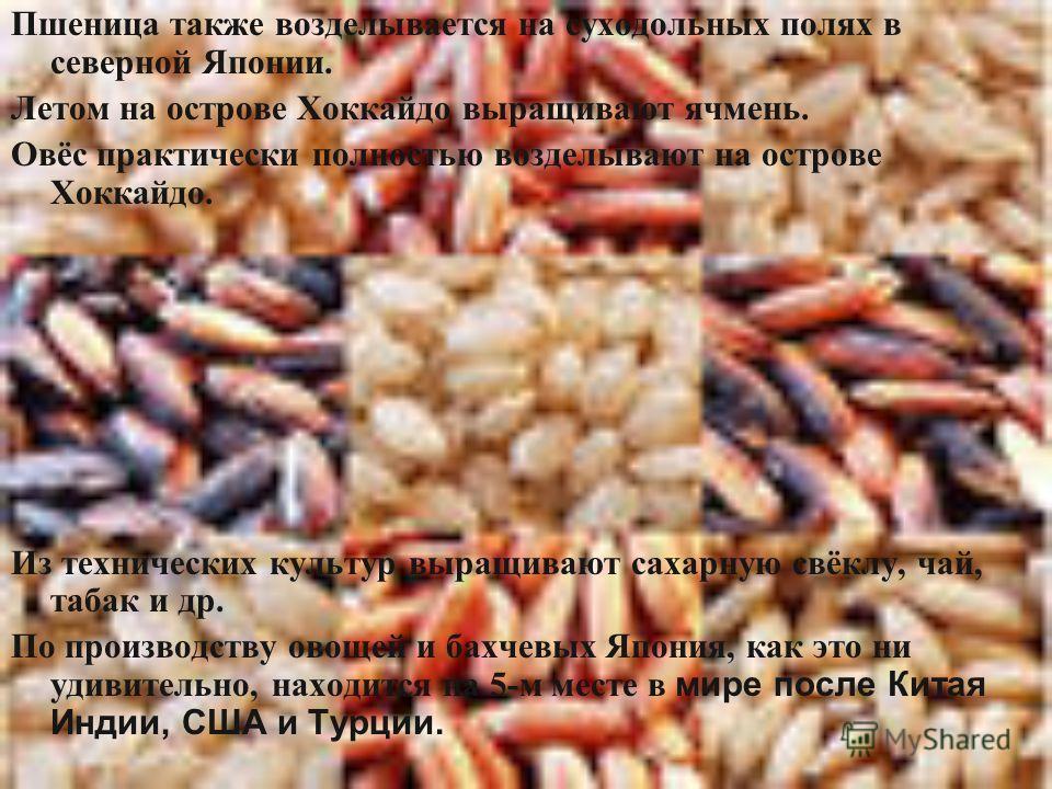 Пшеница также возделывается на суходольных полях в северной Японии. Летом на острове Хоккайдо выращивают ячмень. Овёс практически полностью возделывают на острове Хоккайдо. Из технических культур выращивают сахарную свёклу, чай, табак и др. По произв