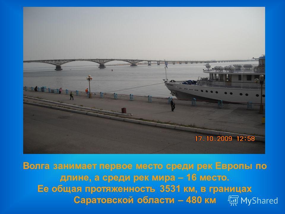 Волга занимает первое место среди рек Европы по длине, а среди рек мира – 16 место. Ее общая протяженность 3531 км, в границах Саратовской области – 480 км