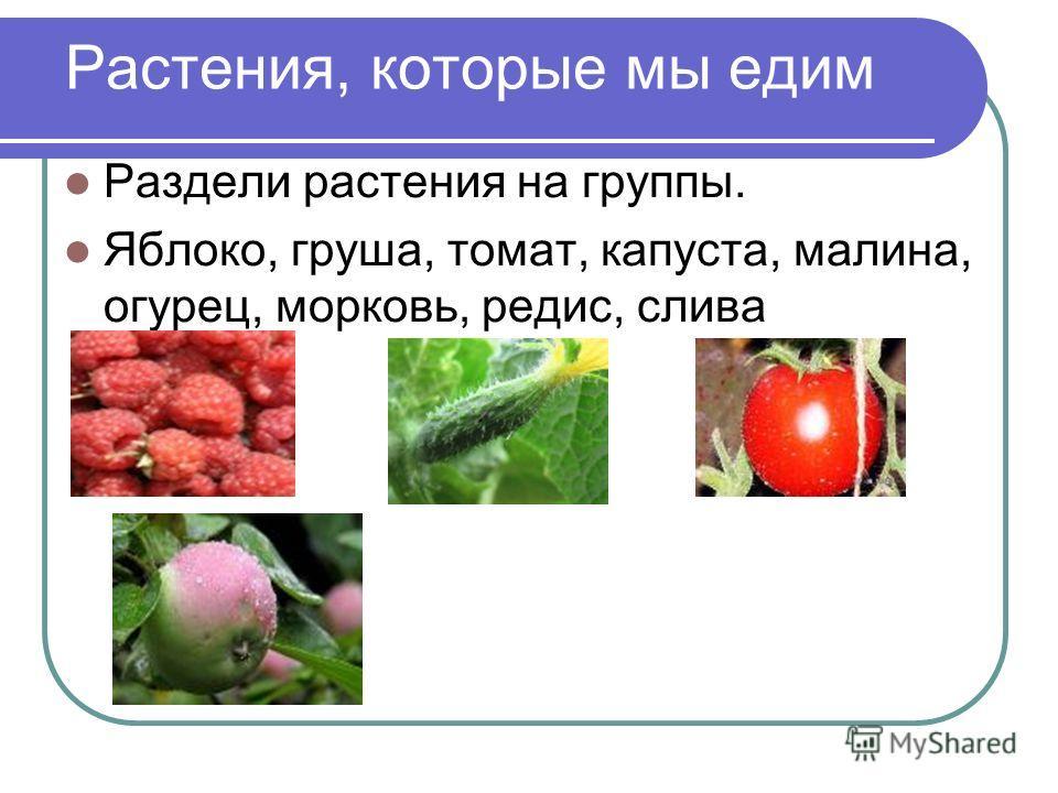 Растения, которые мы едим Раздели растения на группы. Яблоко, груша, томат, капуста, малина, огурец, морковь, редис, слива