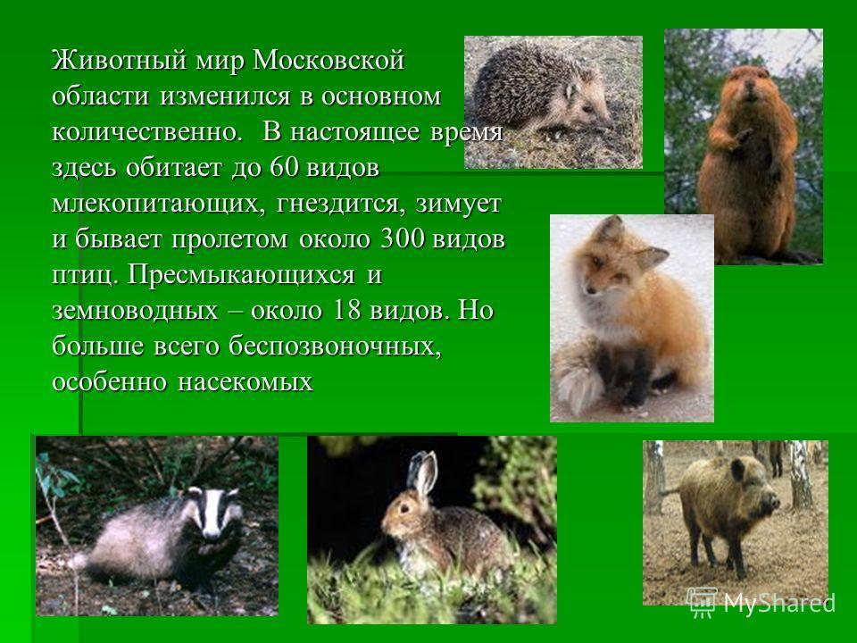 Животный мир Московской области изменился в основном количественно. В настоящее время здесь обитает до 60 видов млекопитающих, гнездится, зимует и бывает пролетом около 300 видов птиц. Пресмыкающихся и земноводных – около 18 видов. Но больше всего бе