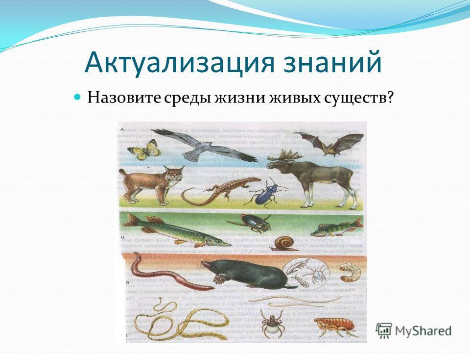 Актуализация знаний Назовите среды жизни живых существ?