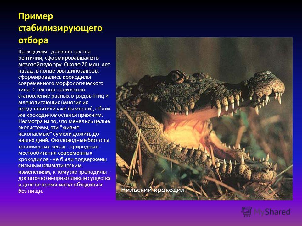 Пример стабилизирующего отбора Крокодилы - древняя группа рептилий, сформировавшаяся в мезозойскую эру. Около 70 млн. лет назад, в конце эры динозавров, сформировались крокодилы современного морфологического типа. С тех пор произошло становление разн