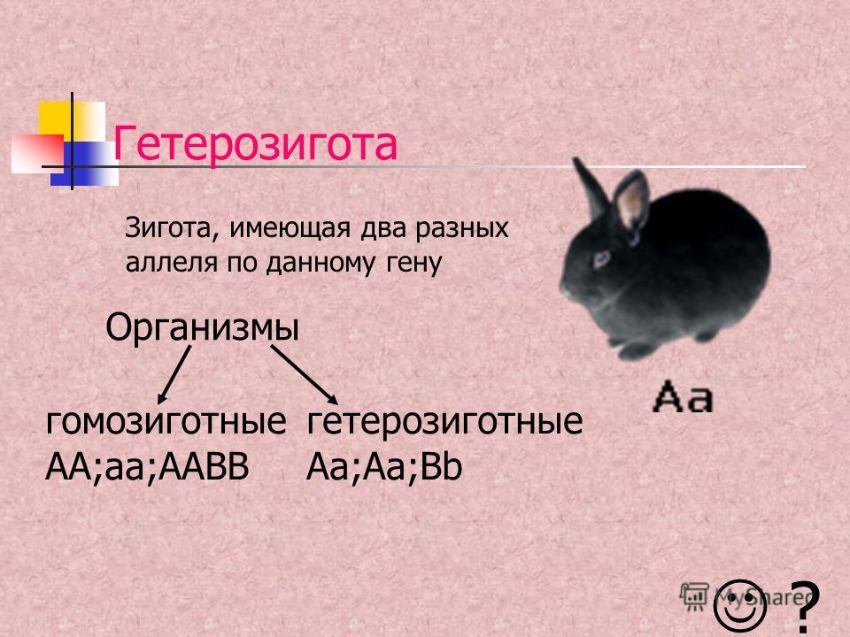 Гетерозигота Зигота, имеющая два разных аллеля по данному гену Организмы ? гомозиготные AA;aa;AABB гетерозиготные Aa;Aa;Bb