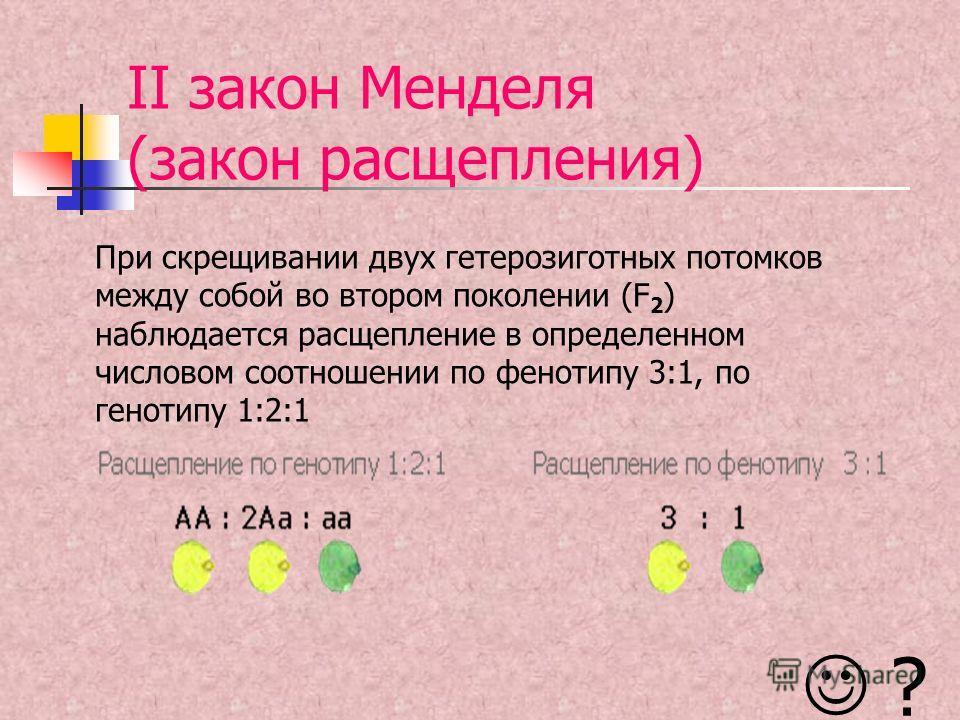 II закон Менделя (закон расщепления) При скрещивании двух гетерозиготных потомков между собой во втором поколении (F 2 ) наблюдается расщепление в определенном числовом соотношении по фенотипу 3:1, по генотипу 1:2:1 ?