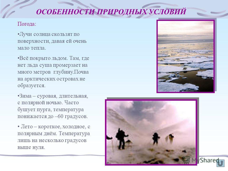 ОСОБЕННОСТИ ПРИРОДНЫХ УСЛОВИЙ Погода: Лучи солнца скользят по поверхности, давая ей очень мало тепла. Всё покрыто льдом. Там, где нет льда суша промерзает на много метров глубину.Почва на арктических островах не образуется. Зима – суровая, длительная