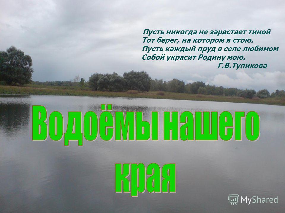 Пусть никогда не зарастает тиной Тот берег, на котором я стою. Пусть каждый пруд в селе любимом Собой украсит Родину мою. Г.В.Тупикова