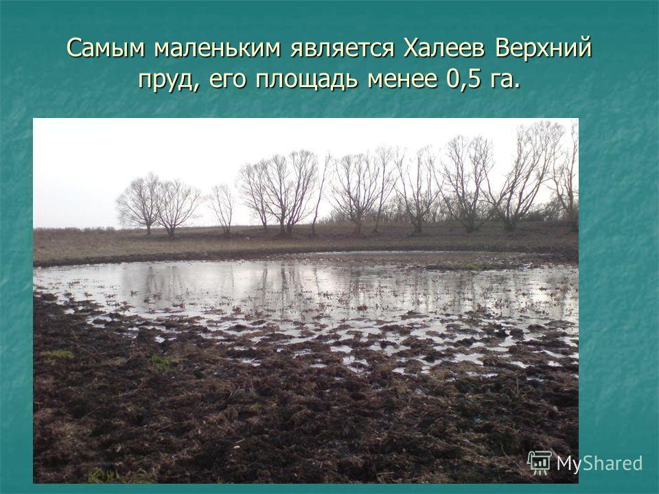 Самым маленьким является Халеев Верхний пруд, его площадь менее 0,5 га.