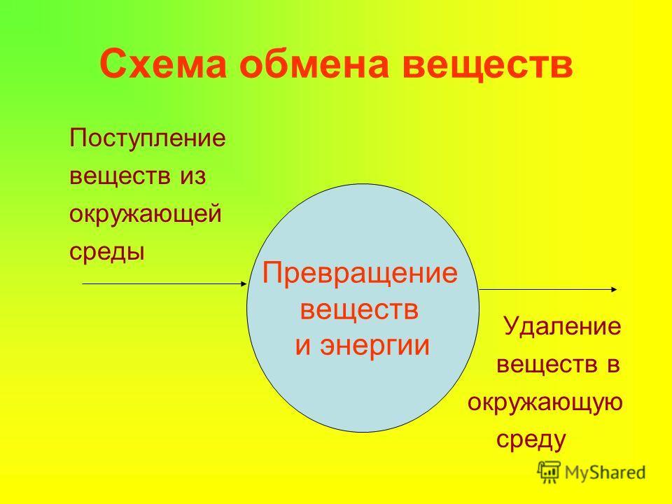 Урок по биологии 6 класс обмен веществ