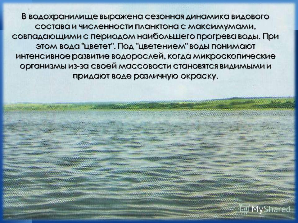 В водохранилище выражена сезонная динамика видового состава и численности планктона с максимумами, совпадающими с периодом наибольшего прогрева воды. При этом вода