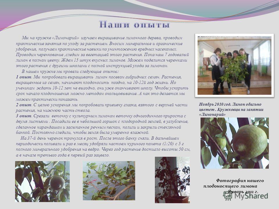 Мы на кружке «Лимонарий» изучаем выращивание лимонного дерева, проводим практические занятия по уходу за растением. Вносим минеральные и органические удобрения, получаем практические навыки по уничтожению вредных насекомых. Проводим черенкование,след