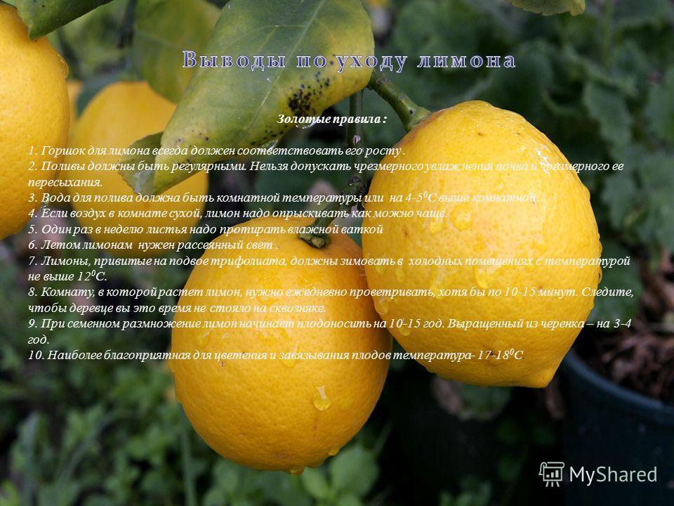 Золотые правила : 1. Горшок для лимона всегда должен соответствовать его росту. 2. Поливы должны быть регулярными. Нельзя допускать чрезмерного увлажнения почва и чрезмерного ее пересыхания. 3. Вода для полива должна быть комнатной температуры или на