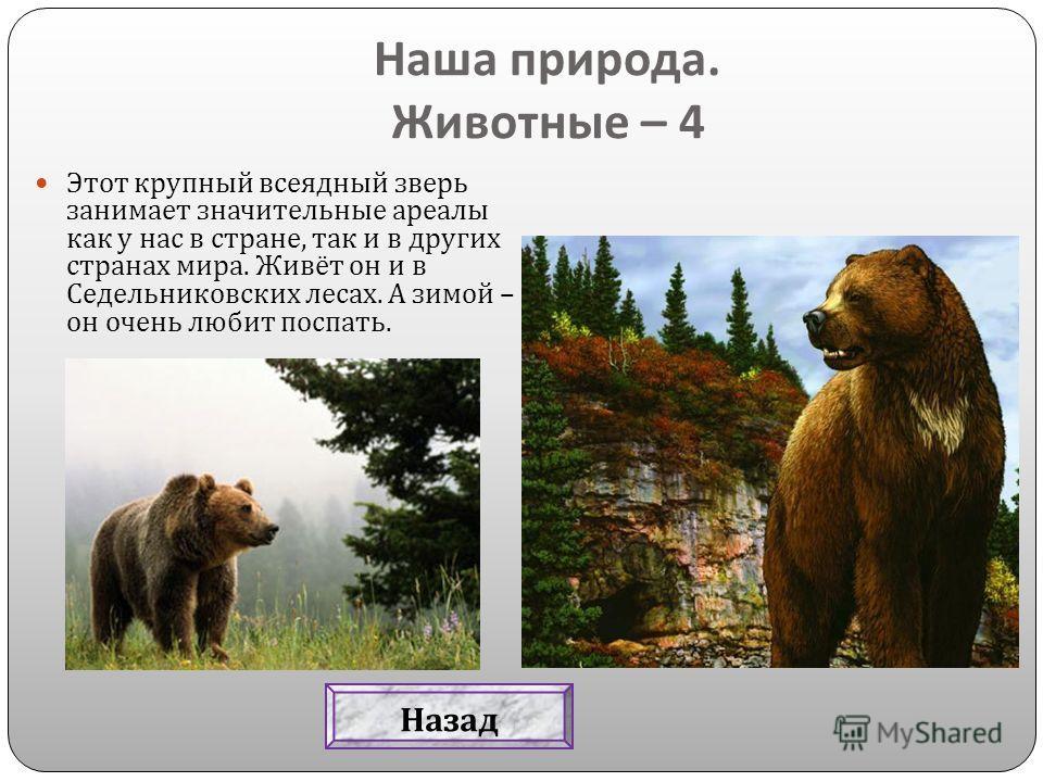 Этот крупный всеядный зверь занимает значительные ареалы как у нас в стране, так и в других странах мира. Живёт он и в Седельниковских лесах. А зимой – он очень любит поспать. Наша природа. Животные – 4 Назад