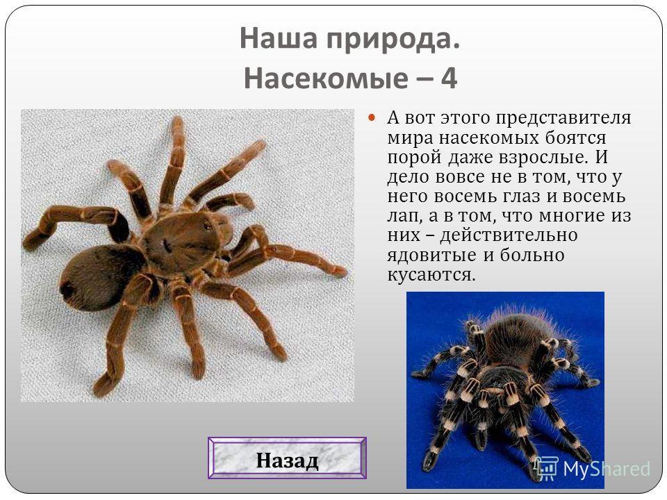 А вот этого представителя мира насекомых боятся порой даже взрослые. И дело вовсе не в том, что у него восемь глаз и восемь лап, а в том, что многие из них – действительно ядовитые и больно кусаются. Наша природа. Насекомые – 4 Назад