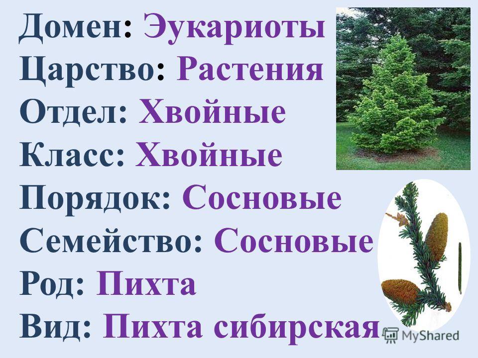 Пихта сибирская Тип растения: древесное Отношение к свету: теневыносливое Отношение к влаге: предпочитает умеренное увлажнение Зимовка: зимостойкое Почва: предпочитает садовые почвы Высота: высокое дерево (более 3 м) Ценность в культуре: хвойное