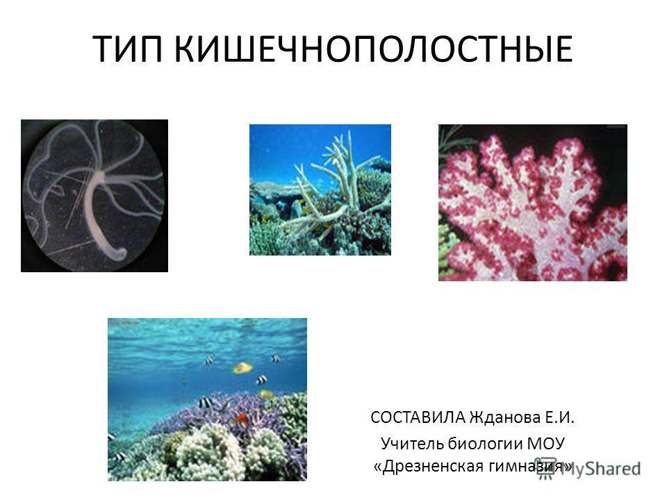 ТИП КИШЕЧНОПОЛОСТНЫЕ СОСТАВИЛА Жданова Е.И. Учитель биологии МОУ «Дрезненская гимназия»
