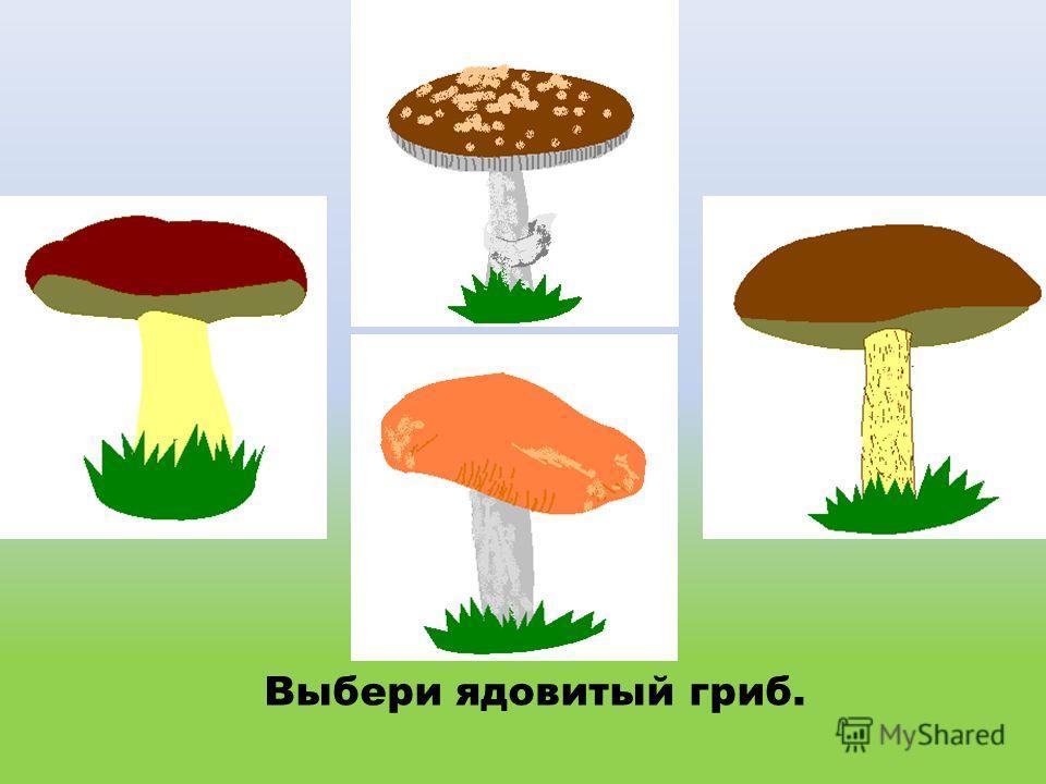 Выбери ядовитый гриб.