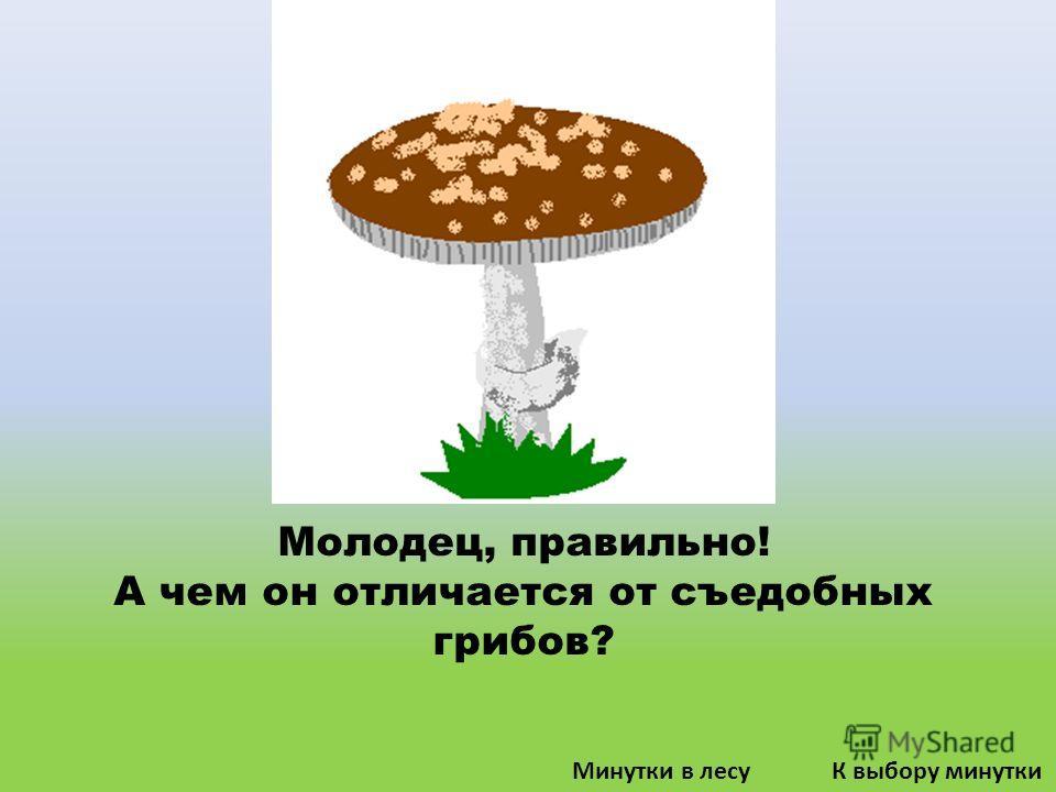 Молодец, правильно! А чем он отличается от съедобных грибов? К выбору минуткиМинутки в лесу