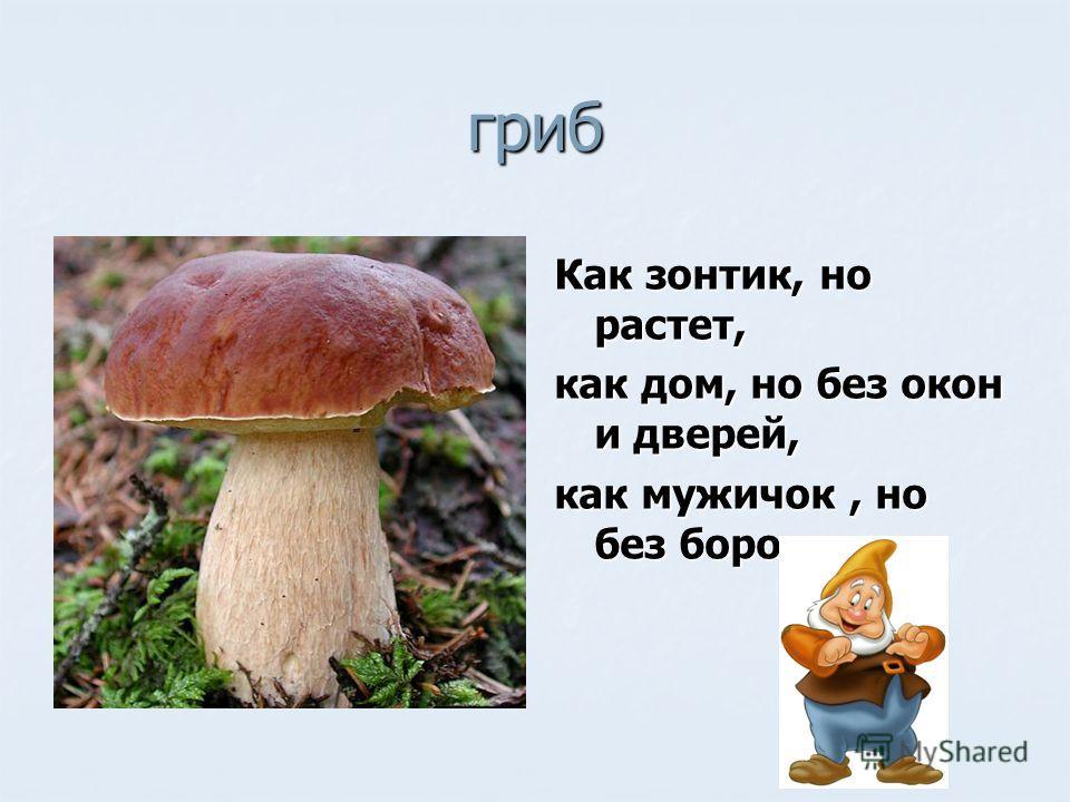 гриб Как зонтик, но растет, как дом, но без окон и дверей, как мужичок, но без бороды.