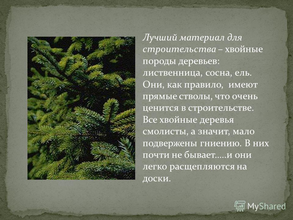 Лучший материал для строительства – хвойные породы деревьев: лиственница, сосна, ель. Они, как правило, имеют прямые стволы, что очень ценится в строительстве. Все хвойные деревья смолисты, а значит, мало подвержены гниению. В них почти не бывает…..и