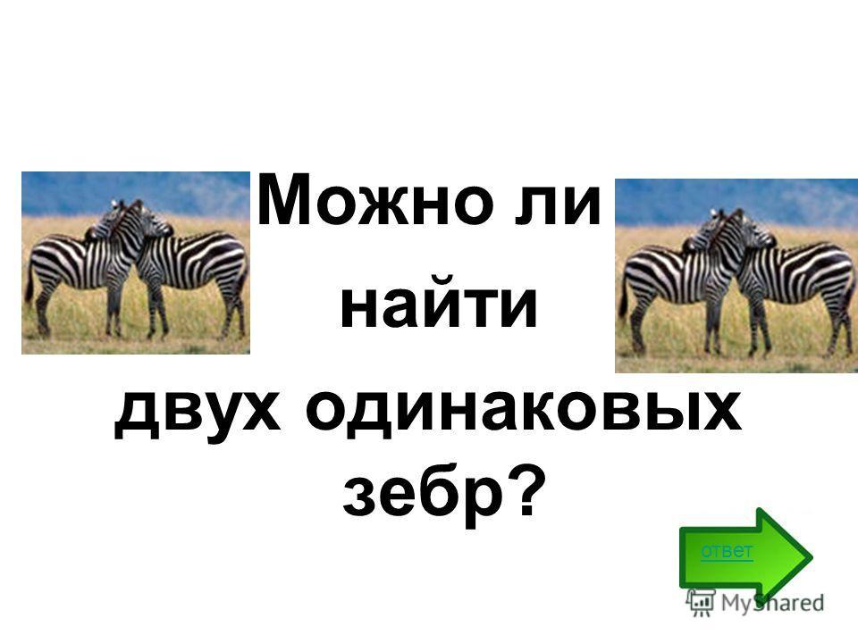 Можно ли найти двух одинаковых зебр? ответ