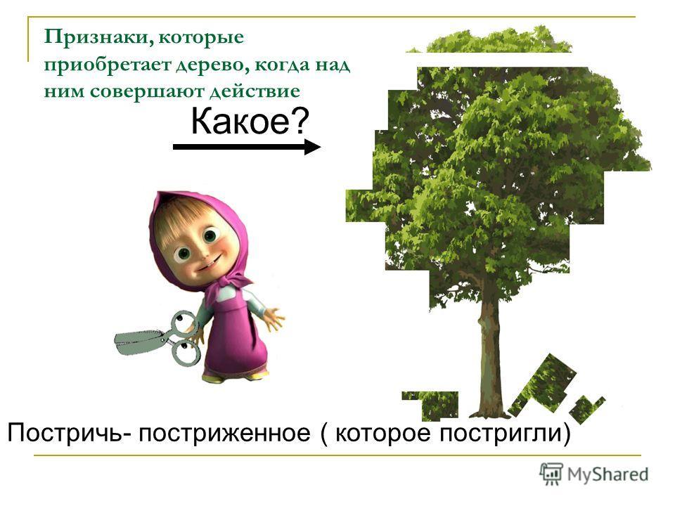 Какое? Постричь- постриженное ( которое постригли) Признаки, которые приобретает дерево, когда над ним совершают действие