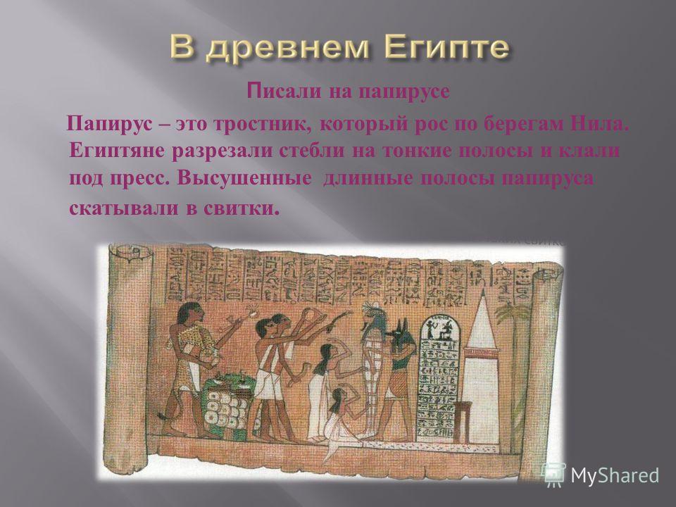 П исали на папирусе Папирус – это тростник, который рос по берегам Нила. Египтяне разрезали стебли на тонкие полосы и клали под пресс. Высушенные длинные полосы папируса скатывали в свитки.