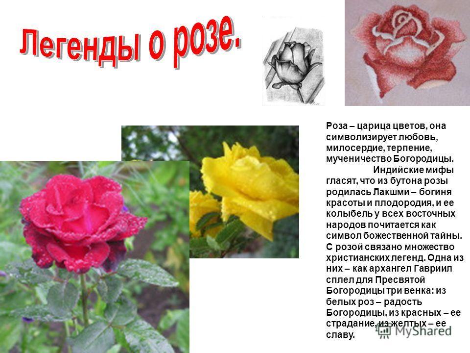 Роза – царица цветов, она символизирует любовь, милосердие, терпение, мученичество Богородицы. Индийские мифы гласят, что из бутона розы родилась Лакшми – богиня красоты и плодородия, и ее колыбель у всех восточных народов почитается как символ божес