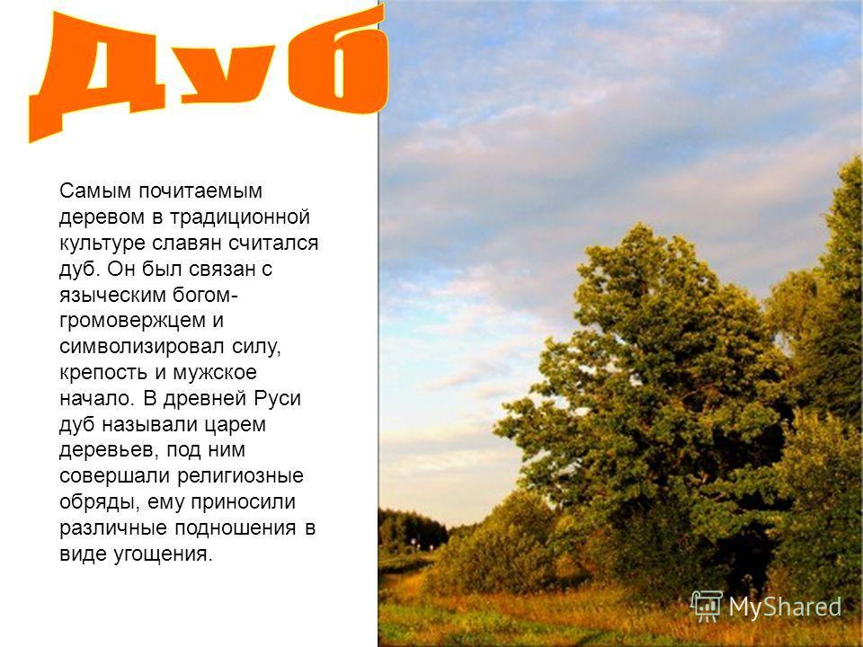 Самым почитаемым деревом в традиционной культуре славян считался дуб. Он был связан с языческим богом- громовержцем и символизировал силу, крепость и мужское начало. В древней Руси дуб называли царем деревьев, под ним совершали религиозные обряды, ем