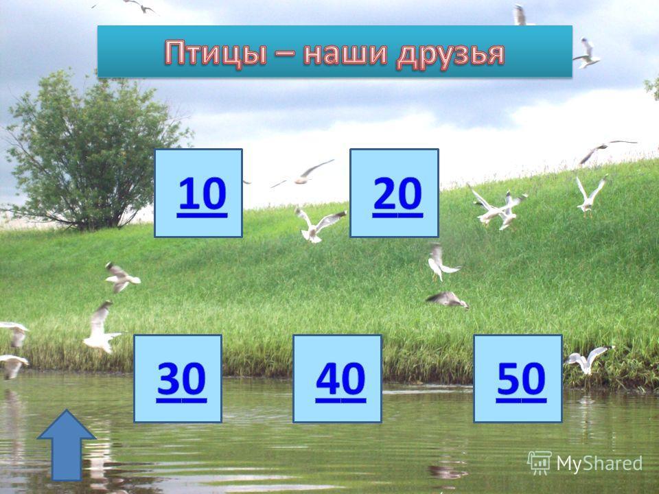 Птицы – наши друзья Эти забавные животные Насекомые нашей планеты Всем обо всём