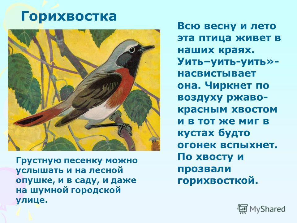 Крапивник - оседлая и кочующая птица. Нередко она не улетает на юг даже в морозы зимы и, когда исчезают насекомые, питается семенами и ягодами. Дили- дили-дили-дон- дон-дон» - это поёт птица - кроха - крапивник. Крапивник Величиной она с грецкий оре