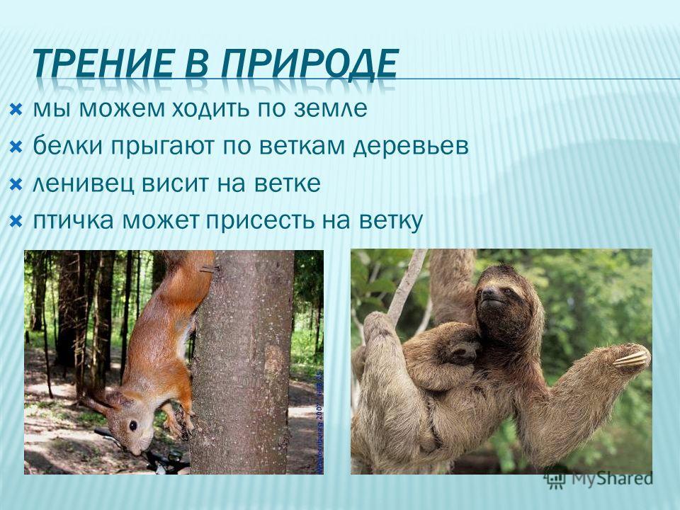 мы можем ходить по земле белки прыгают по веткам деревьев ленивец висит на ветке птичка может присесть на ветку