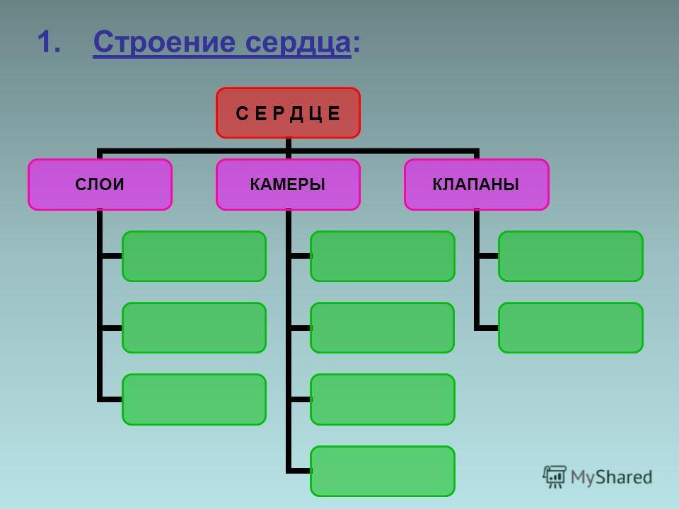 С Е Р Д Ц Е СЛОИКАМЕРЫКЛАПАНЫ