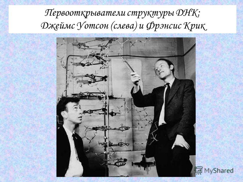Первооткрыватели структуры ДНК: Джеймс Уотсон (слева) и Фрэнсис Крик