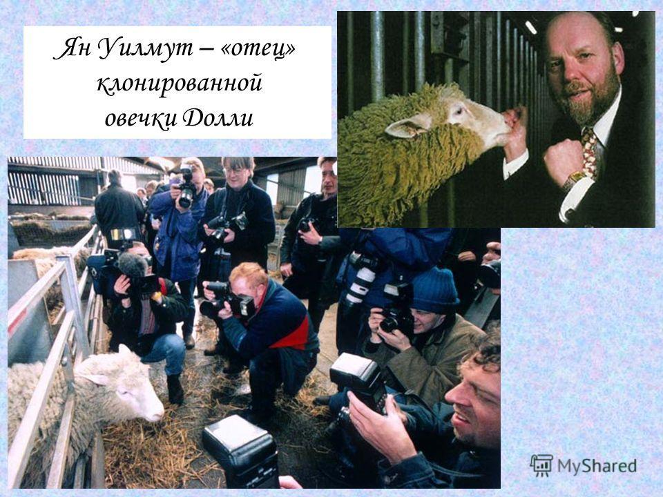 Ян Уилмут – «отец» клонированной овечки Долли