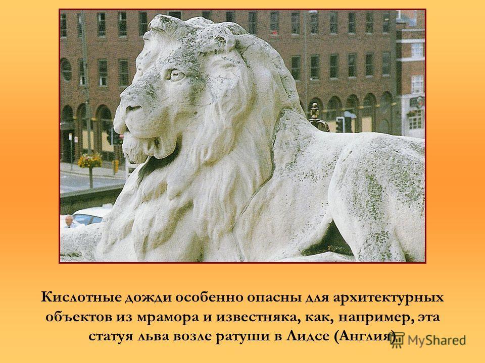 Кислотные дожди особенно опасны для архитектурных объектов из мрамора и известняка, как, например, эта статуя льва возле ратуши в Лидсе (Англия)