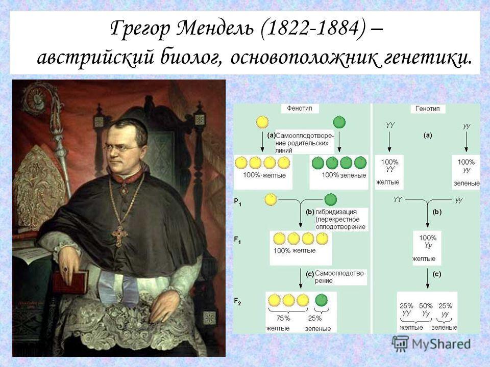 Грегор Мендель (1822-1884) – австрийский биолог, основоположник генетики.