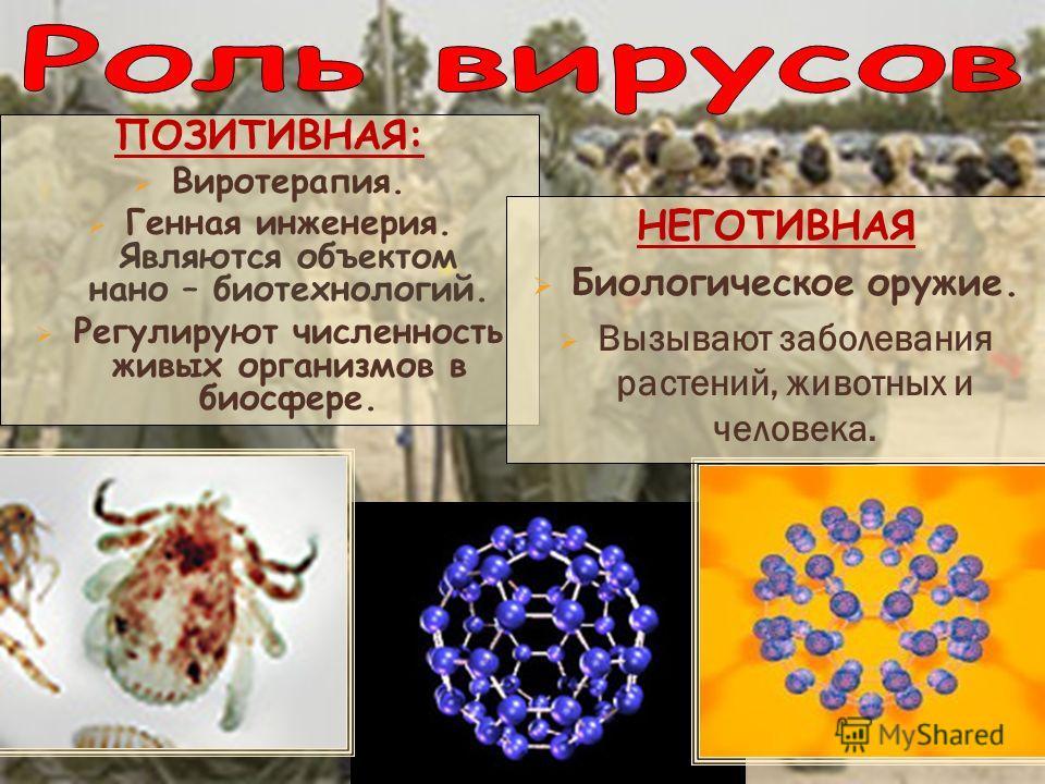 ПОЗИТИВНАЯ: Виротерапия. Генная инженерия. Являются объектом нано – биотехнологий. Регулируют численность живых организмов в биосфере. НЕГОТИВНАЯ Биологическое оружие. Вызывают заболевания растений, животных и человека.
