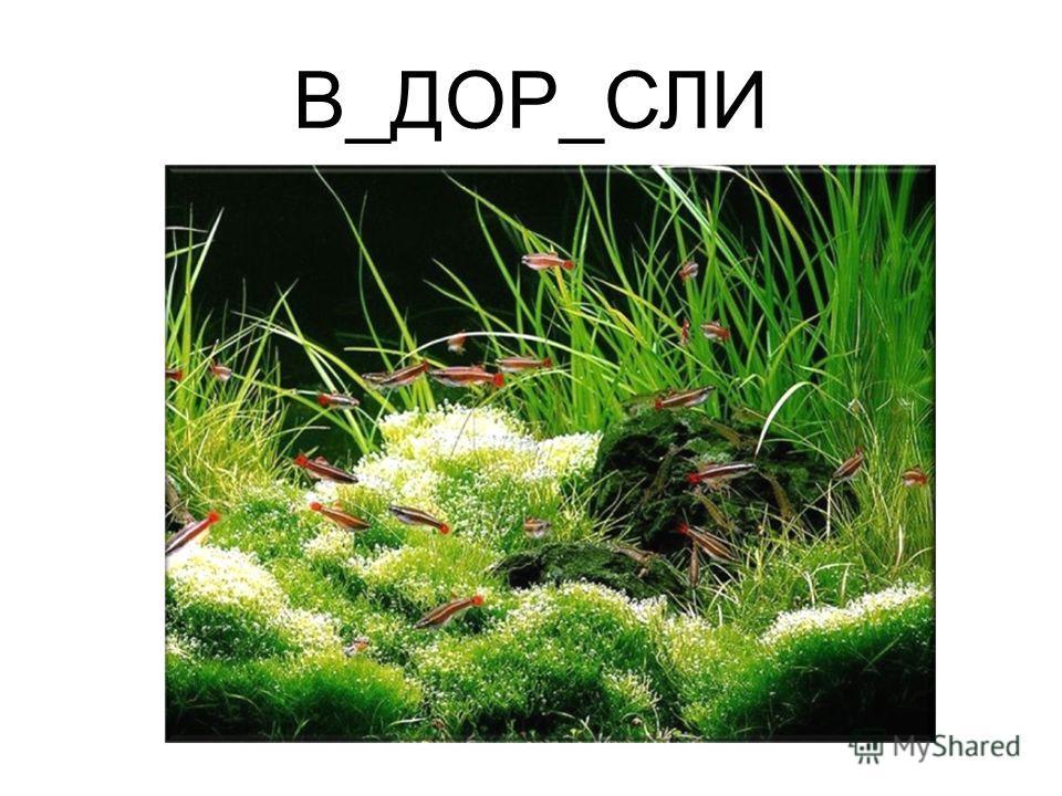 В_ДОР_СЛИ