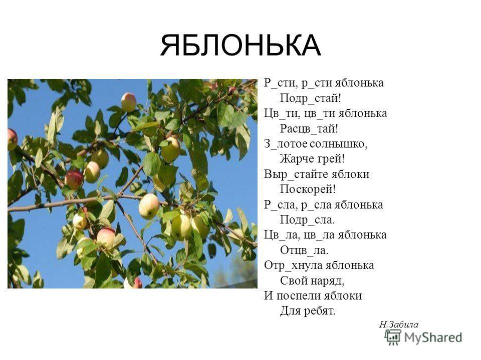 ЯБЛОНЬКА Р_сти, р_сти яблонька Подр_стай! Цв_ти, цв_ти яблонька Расцв_тай! З_лотое солнышко, Жарче грей! Выр_стайте яблоки Поскорей! Р_сла, р_сла яблонька Подр_сла. Цв_ла, цв_ла яблонька Отцв_ла. Отр_хнула яблонька Свой наряд, И поспели яблоки Для ре