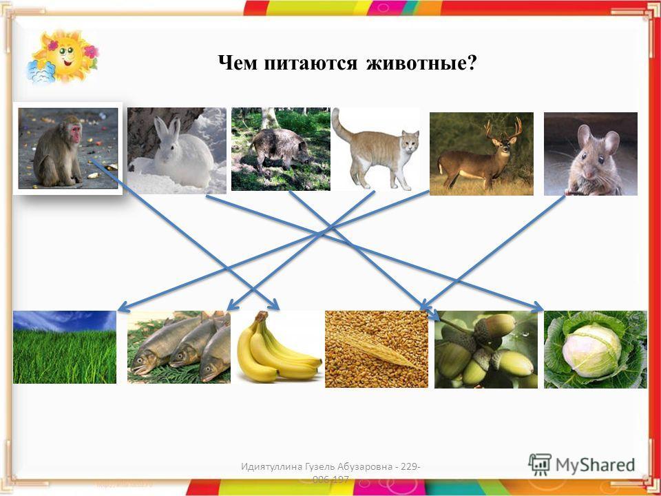 Чем питаются животные? Идиятуллина Гузель Абузаровна - 229- 006-197
