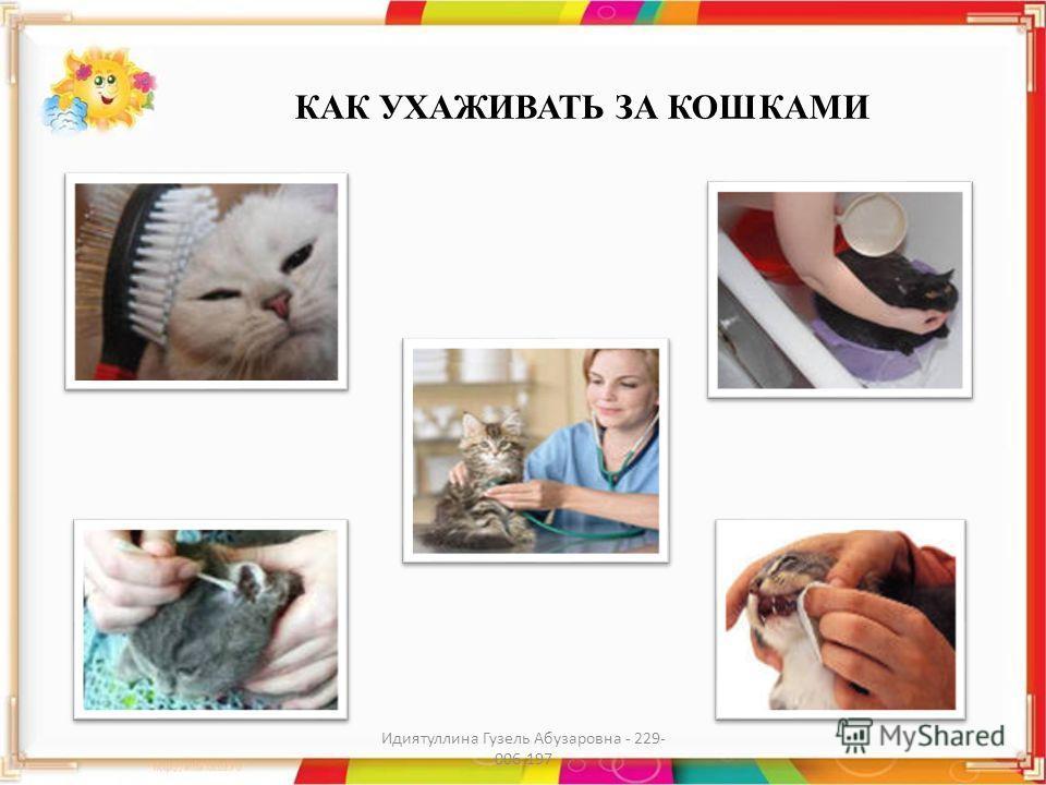 КАК УХАЖИВАТЬ ЗА КОШКАМИ Идиятуллина Гузель Абузаровна - 229- 006-197