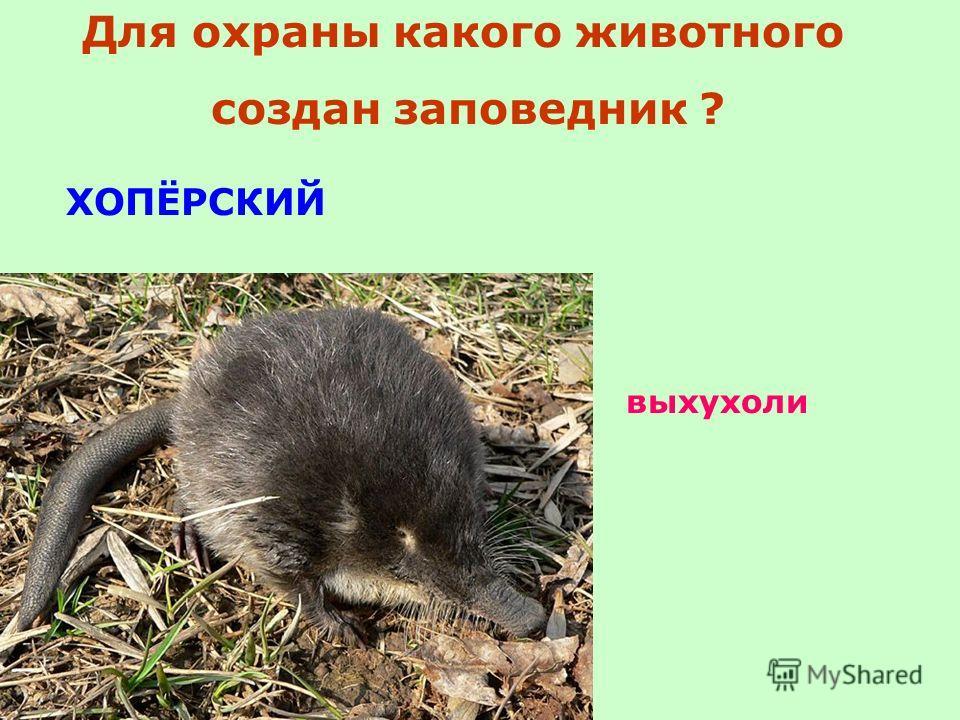 ХОПЁРСКИЙ выхухоли Для охраны какого животного создан заповедник ?