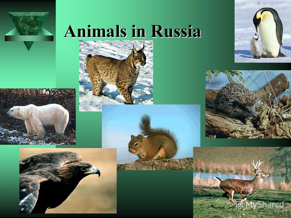 Animals in Russia