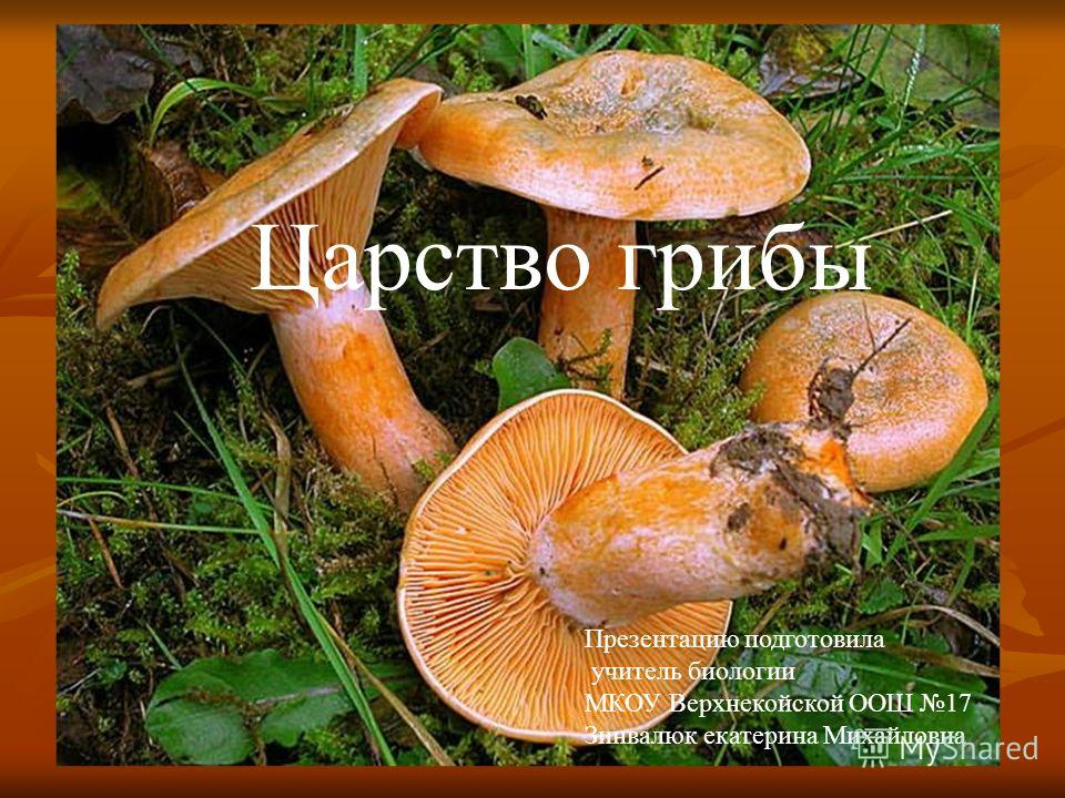 Царство грибы Презентацию подготовила учитель биологии МКОУ Верхнекойской ООШ 17 Зинвалюк екатерина Михайловна